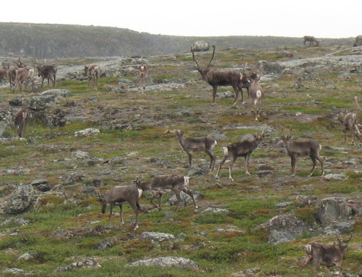 Kitikmeot Region, Nunavut Territory (Aug 2008)