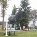Big Moose in Dryden, Ontario